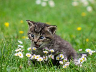 Может ли аллергия пройти с возрастом?