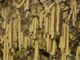 Как лучше справиться с сезонной аллергией?